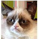 grumpycat meme