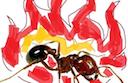spicy_boy by Fire Ants