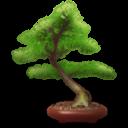 bonsai random