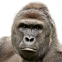 harambe by Nerpson