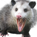 mapossum