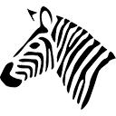 zebra by Andrew