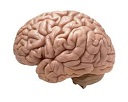 brain random