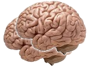 brains random