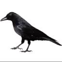 crow random