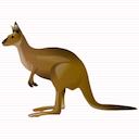 kangaroo random