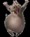 hippo random