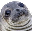 awkward seal random
