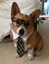 business corgi random