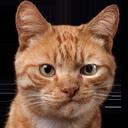 cat smirk random