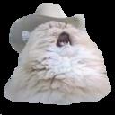 cowboy cat random
