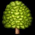 tree random