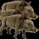 30 50 feral hogs random