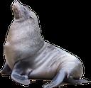 sea lion random