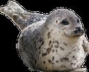 seal random
