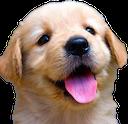 puppy random