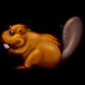 beaver random