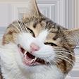 cat smile random