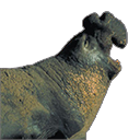 elephant seal random