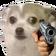 dog nervous gun random