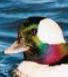 rainbow duck areukiddinme random