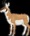 pronghorn antelope random