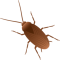 cockroach random