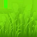 grass random