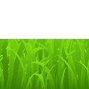 grass mowed random