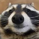 raccoon pokerface random
