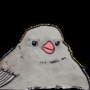 annoyed bird random