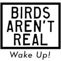 birds arent real random