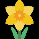 daffodil random