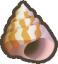 conch shell random