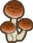 mushrooms random