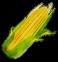 corn random