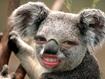 koala random