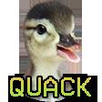 quack random
