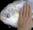 fish pat random