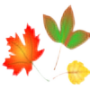 autumn leaves random