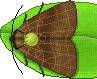 moth random