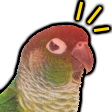 alert parrot random